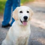 Как важно приходить вовремя, когда тебя ждет собака