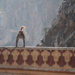 Индия (часть 8: Храм Обезьян – Музей – Как делают ковры)
